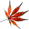 Impressionist Japanese Maple Leaf by Kathy Clark