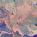 Impressionistic Spring Blossoms by Dora Sofia Caputo Photographic Design and Fine Art