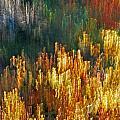 Impressionists Autumn by Skip Willits