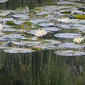 Impressions Of Monet's Water Lilies  by Carla Parris