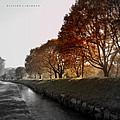 In A Dreamy Autumn Haze by Richard  Couchman