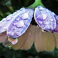 In A Drop Of Rain by Deborah Smith