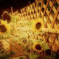 Sunflowers And Lattice by Toni Hopper