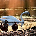 In A Stream Of Golden Light by Maria Urso