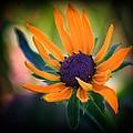 In Bloom by Aurelio Zucco
