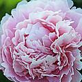 In Bloom by Jamie McBride