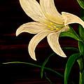 In Bloom by Mark Moore