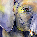 In Captivity by Glenyse Henschel