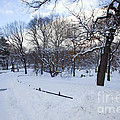 In Central Park by Madeline Ellis