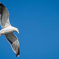 In Flight by Gaurav Singh