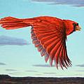 In Flight by James W Johnson