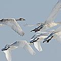 In Flight by Larry Ricker