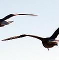 In Flight by Mechala Matthews
