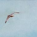 In Flight by Paul Rowe