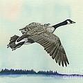 In Flight by Rosellen Westerhoff
