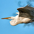In Flight With Stick by Christopher Holmes