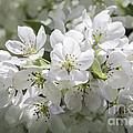 In Full Bloom by Arlene Carmel