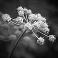 In Full Bloom by Dmitriy Viktorov