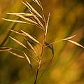 In Praise Of Grass 3 by Steve Harrington