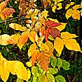 In Praise Of Yellow by Steve Harrington
