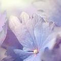 In Pursuit Of Purple 2 by Fraida Gutovich