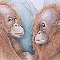 In Safe Hands - Orang Utans by Jill Parry