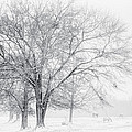 In The Cold by David Waldrop