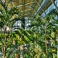 In The Conservatory by William Fields