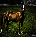 In The Corral 1 - Featured In Comfortable Art And Wildlife Groups by Ericamaxine Price