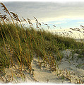 In The Dunes by Barbara Northrup