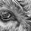 In The Eye by John Farnan