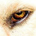 In The Eyes.... by Rod Wiens