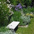 In The Garden by Georgia Hamlin
