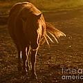In The Golden Light by Angel Ciesniarska