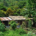 In The Jungle House by Lew Davis