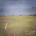 In The Marsh  by Kerri Farley