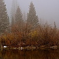 In The Misty Morning by Susan Chesnut