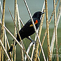 In The Reeds by Bob Hislop