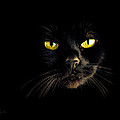 In The Shadows One Black Cat by Bob Orsillo