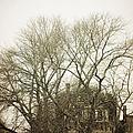 In The Winter by Margie Hurwich