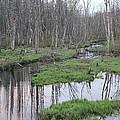 In The Woods by John Ricard jr