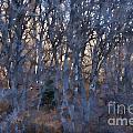 In The Woods V2 by Douglas Barnard
