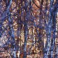 In The Woods V5 by Douglas Barnard