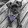 Watercolor Schnauzer Black Dog by Robyn Saunders