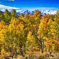 Independence Pass Autumn Colors by James BO  Insogna