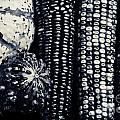 Indian Corn And Squash In Black And White by James BO  Insogna