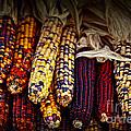 Indian Corn by Elena Elisseeva
