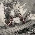 Indian Corn In Basket Partial Color by Smilin Eyes  Treasures