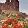 Indian Paintbrush And The Three Gossips by Duncan Mackie