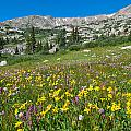 Indian Peaks Wildflower Meadow by Cascade Colors